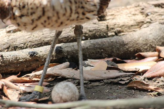 【埼玉県 越谷市】キャンベルタウン野鳥の森に行ってきた!営業時間 料金
