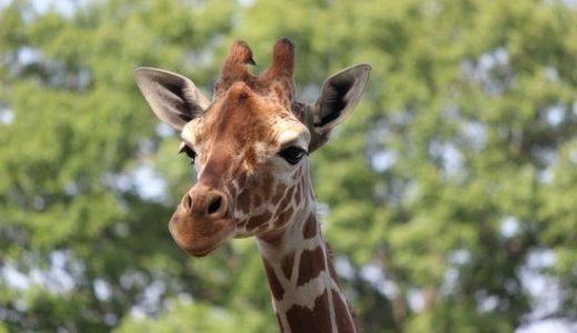 【埼玉県東松山市】こども動物自然公園に行ってきた!料金 クーポン 割引は?