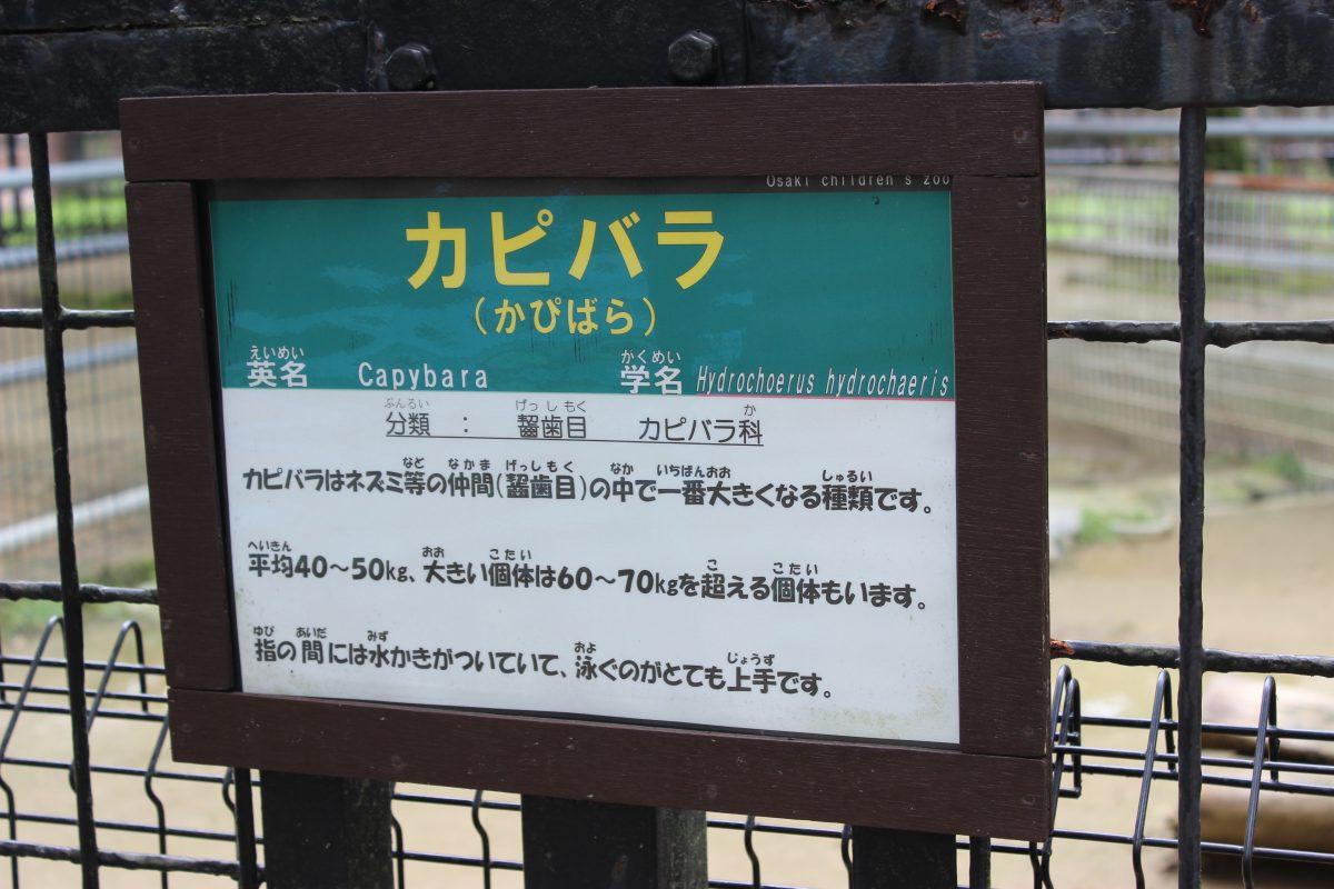 埼玉の大崎公園に行ってきた!カピバラがいるよ!釣りはできるの?